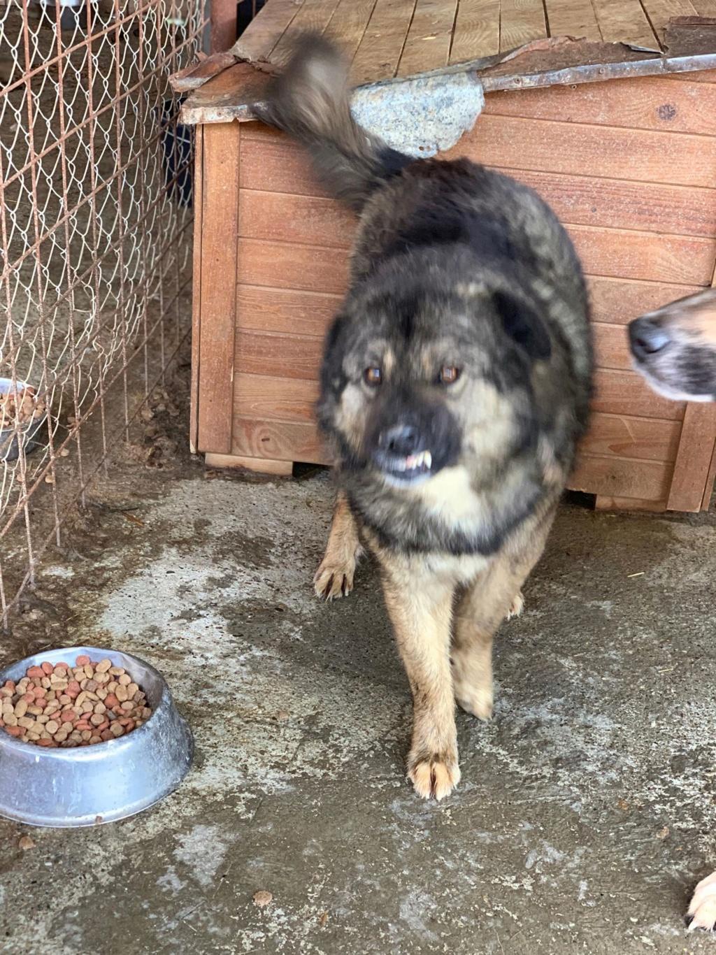 Colorado - mâle - Fourrière de Târgu Frumos - frais d'adoption réduits 57583111