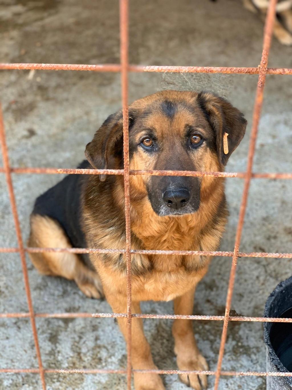 Lunky - mâle -  fourrière de Târgu Frumos - frais d'adoption réduits 57595510