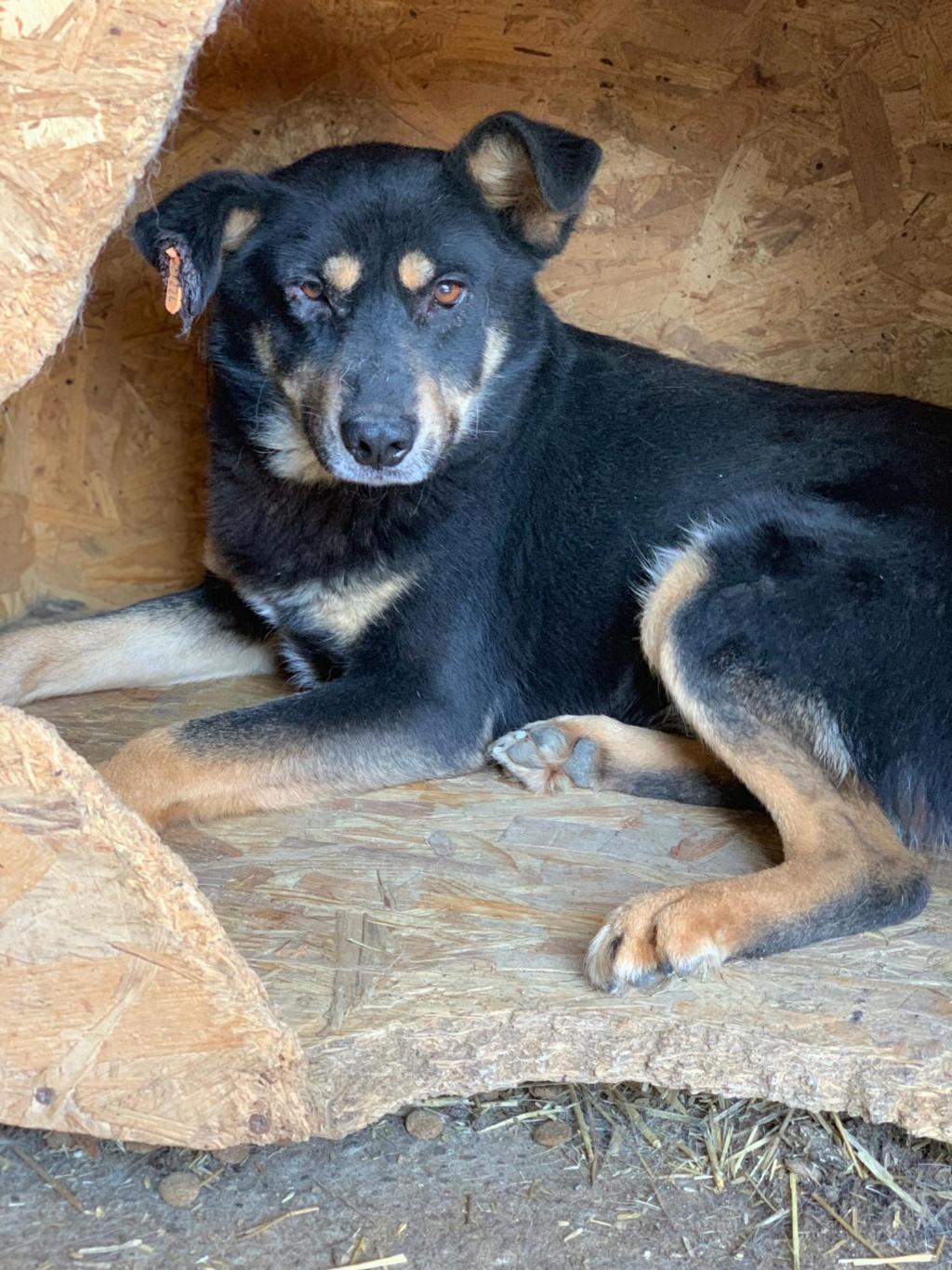 Texas - mâle - fourrière de Târgu Frumos 57602812