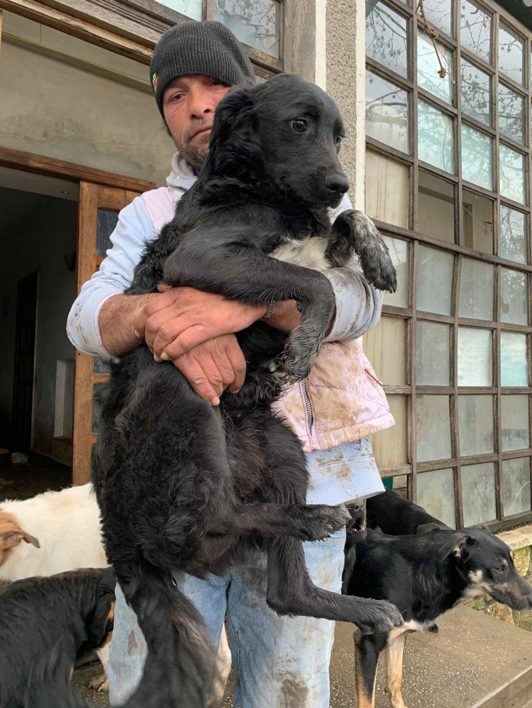 Brent-mâle- dans la maison abandonnée à Târgu Frumos 57624911