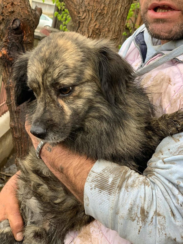 Eliott (ex Woufy) - mâle- dans la maison abandonnée à Târgu Frumos- réservé adoption 67 57644710