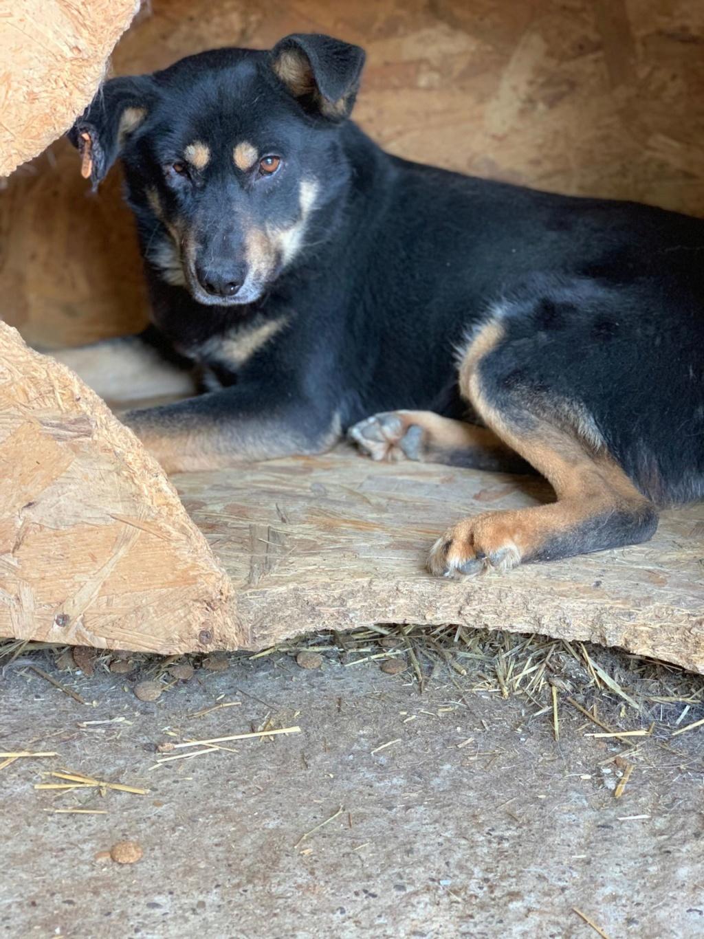 Texas - mâle - fourrière de Târgu Frumos 57649310