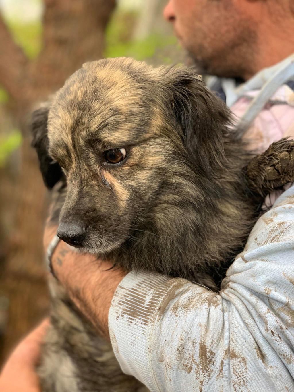 Eliott (ex Woufy) - mâle- dans la maison abandonnée à Târgu Frumos- réservé adoption 67 57678110