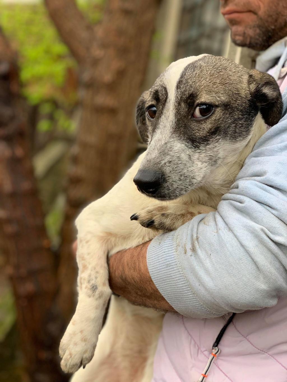 Nala (ex-Louisiana)- femelle- adoptée dans le 67 57798611