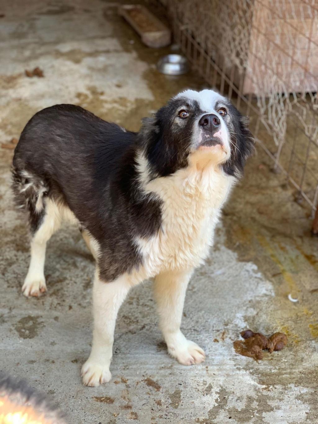 Everest - femelle - fourrière de Târgu Frumos - sera en famille d'accueil dans le 67 en mai 57798612