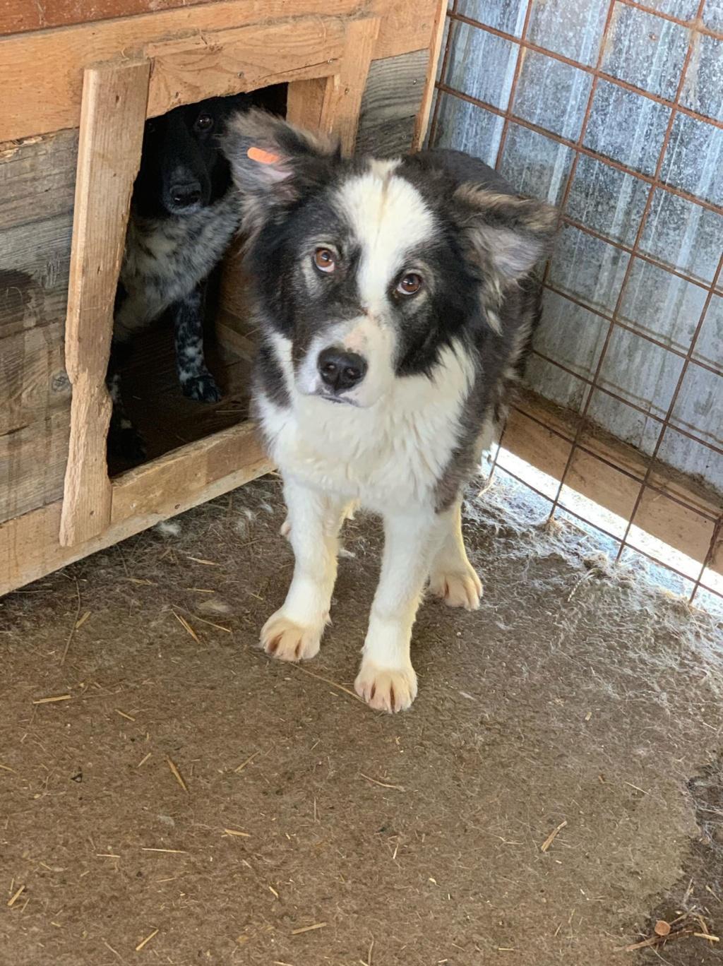 Everest - femelle - fourrière de Târgu Frumos - sera en famille d'accueil dans le 67 en mai 57972710