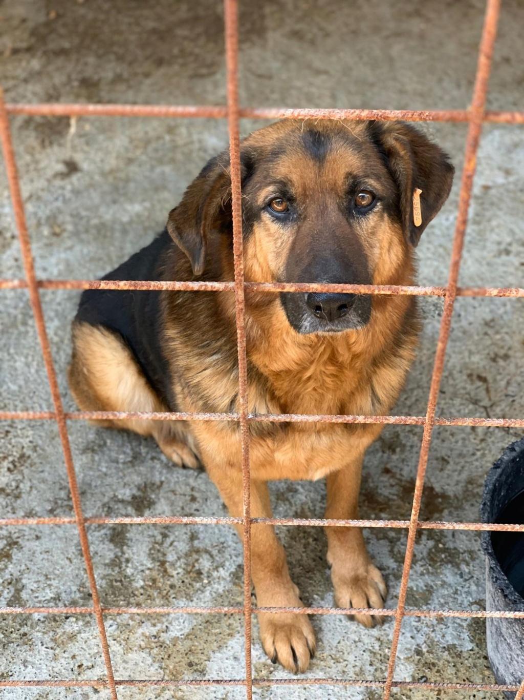 Lunky - mâle -  fourrière de Târgu Frumos - frais d'adoption réduits 57989010