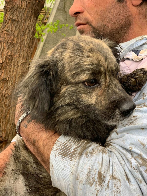 Eliott (ex Woufy) - mâle- dans la maison abandonnée à Târgu Frumos- réservé adoption 67 58019410