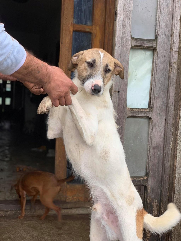 Pagnol-mâle- dans la maison abandonnée à Târgu Frumos 58019411