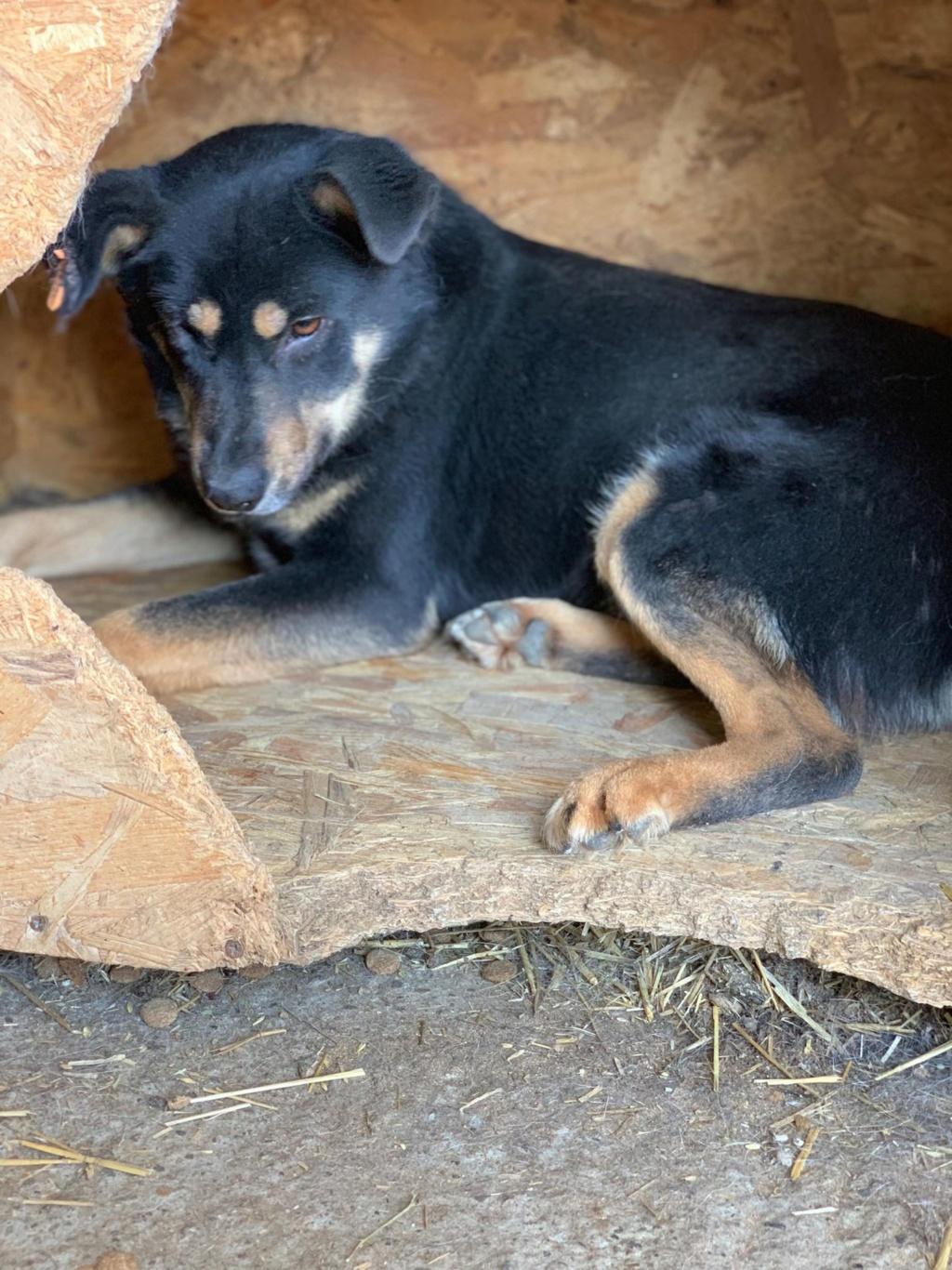 Texas - mâle - fourrière de Târgu Frumos 58033010