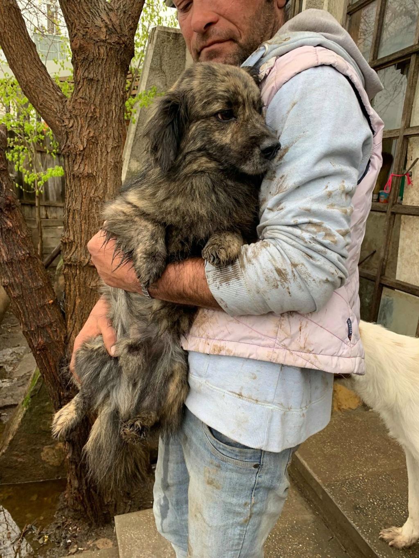 Eliott (ex Woufy) - mâle- dans la maison abandonnée à Târgu Frumos- réservé adoption 67 58373312