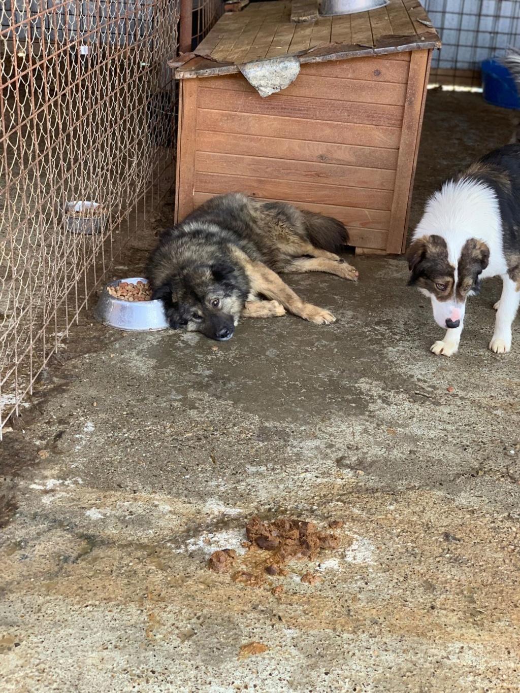Colorado - mâle - Fourrière de Târgu Frumos - frais d'adoption réduits 58373410