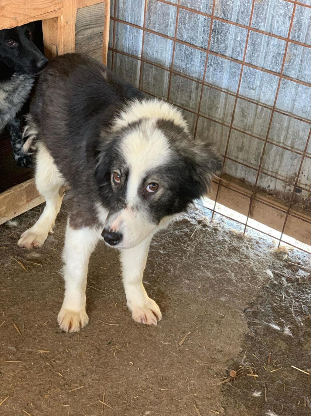 Everest - femelle - fourrière de Târgu Frumos - sera en famille d'accueil dans le 67 en mai 58373610
