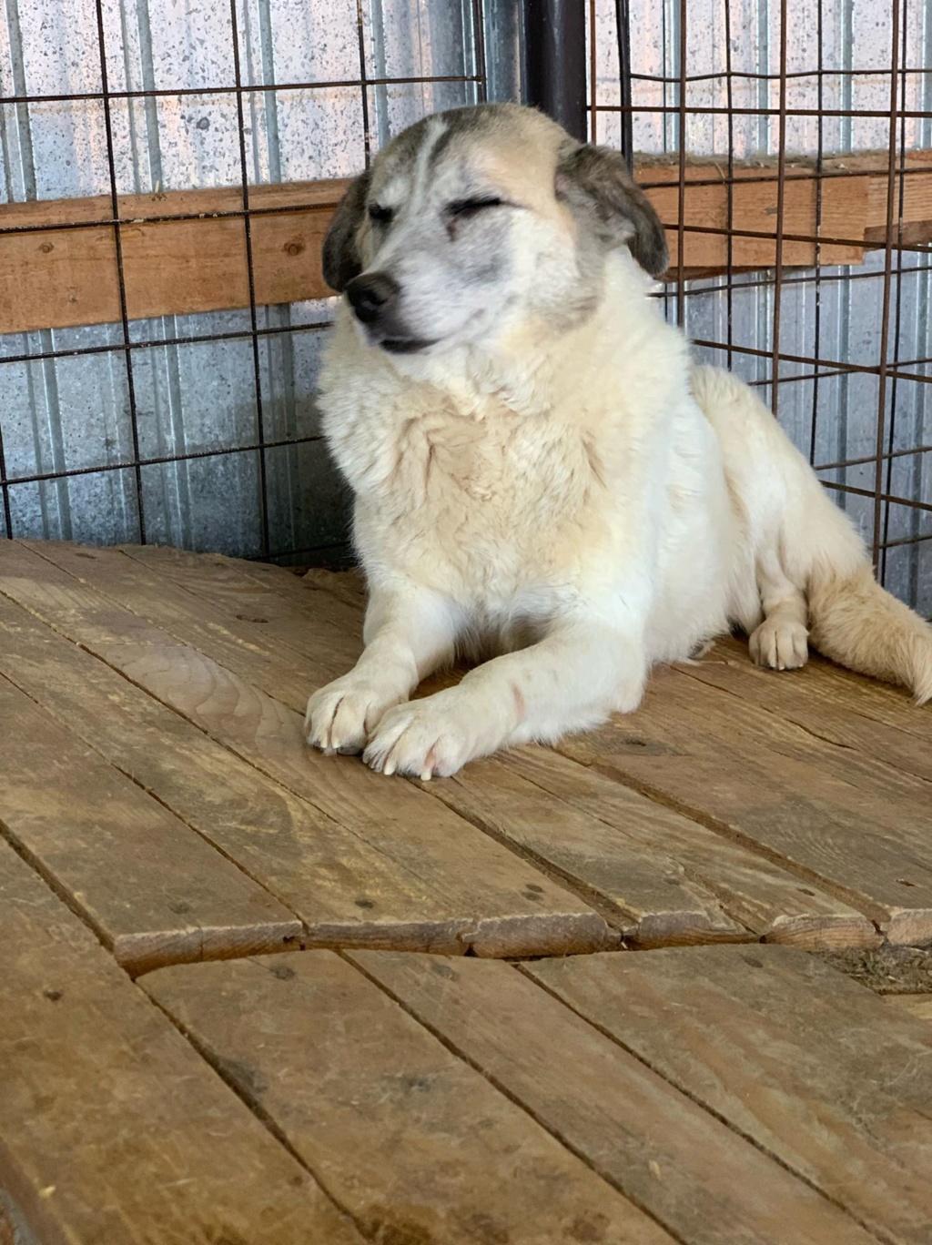 Anouchka - femelle - fourrière de Târgu Frumos 58375310