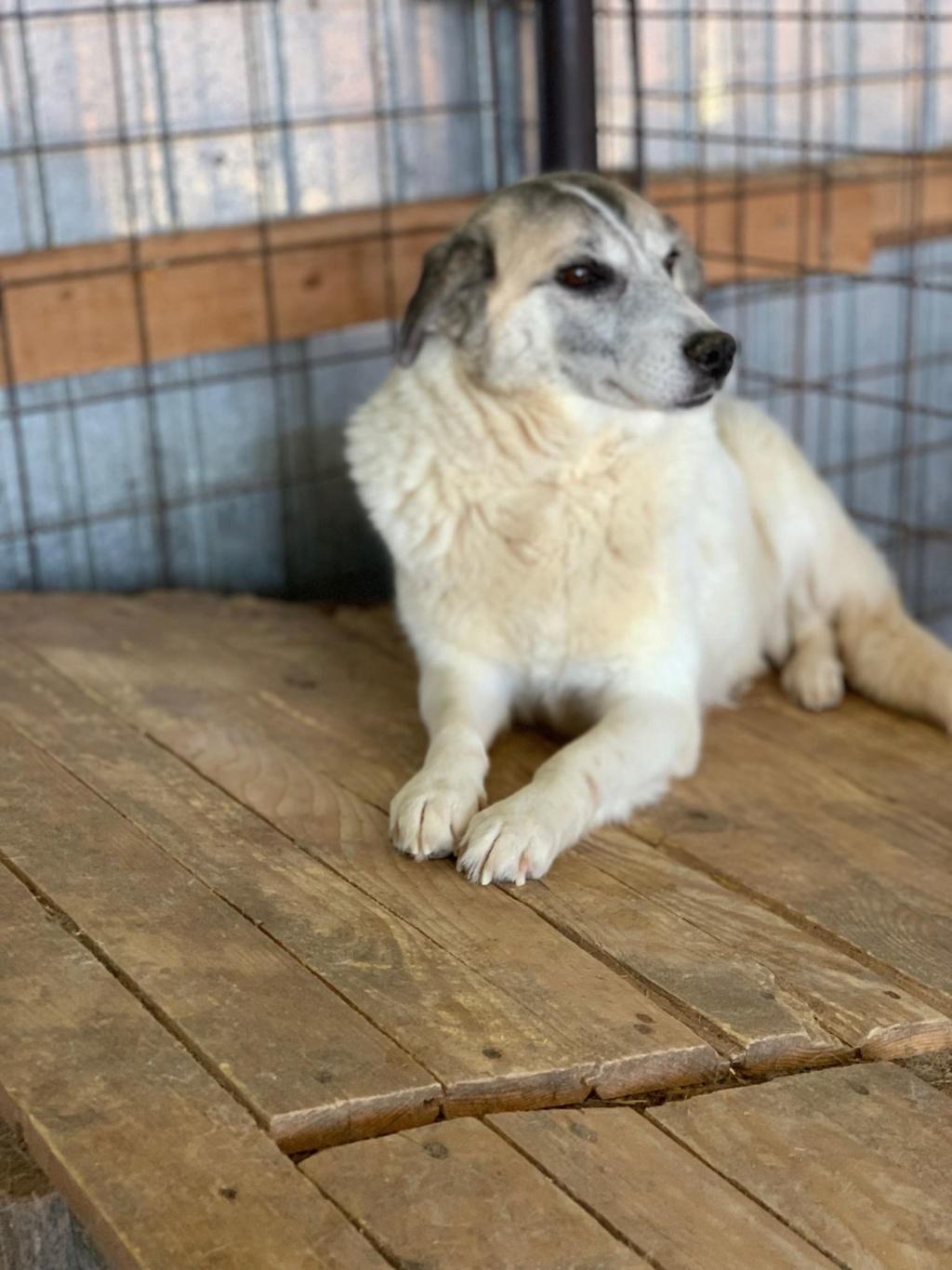 Anouchka - femelle - fourrière de Târgu Frumos 58378410