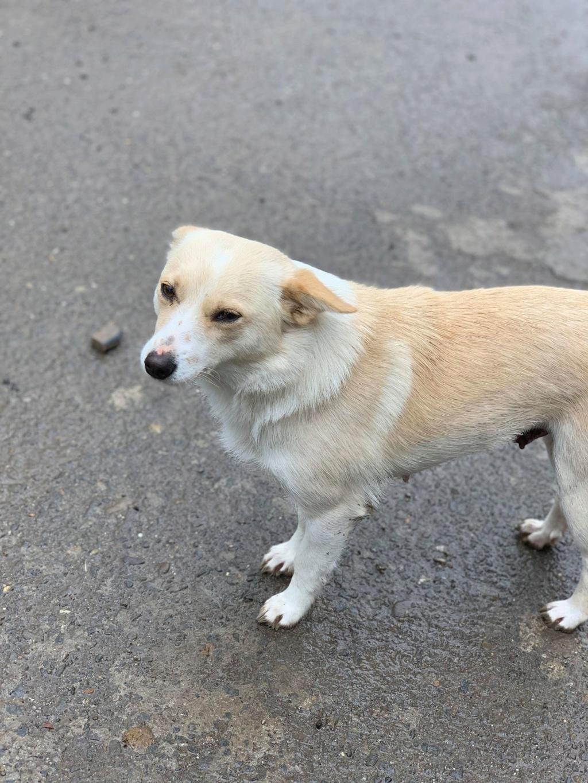 Nesta (ex-Asia) - femelle- Fourrière de Târgu Frumos - réservée adoption (68) 58380210
