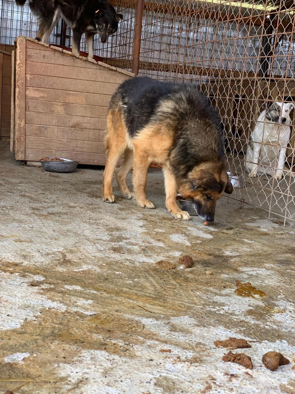 Papa John - mâle - Fourrière de Târgu Frumos - frais d'adoption réduits 58381010
