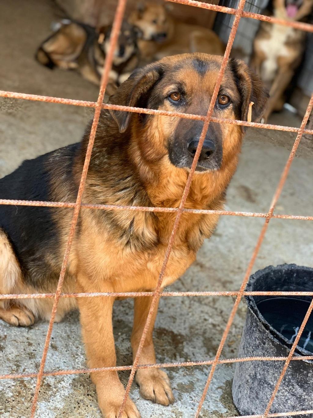 Lunky - mâle -  fourrière de Târgu Frumos - frais d'adoption réduits 58383110