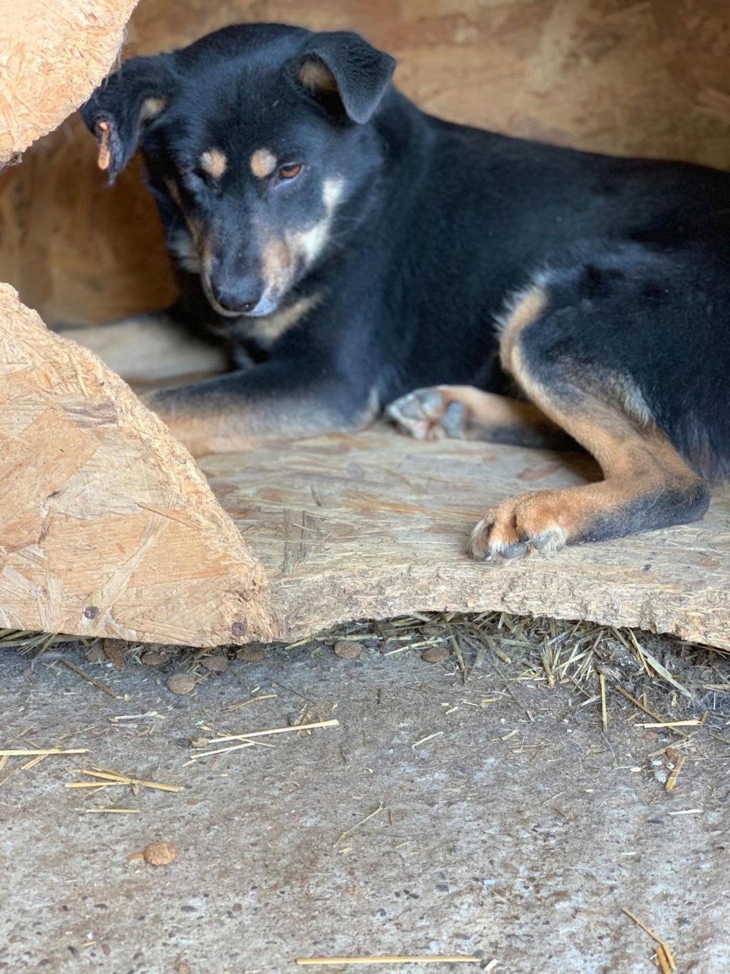 Texas - mâle - fourrière de Târgu Frumos 58383610