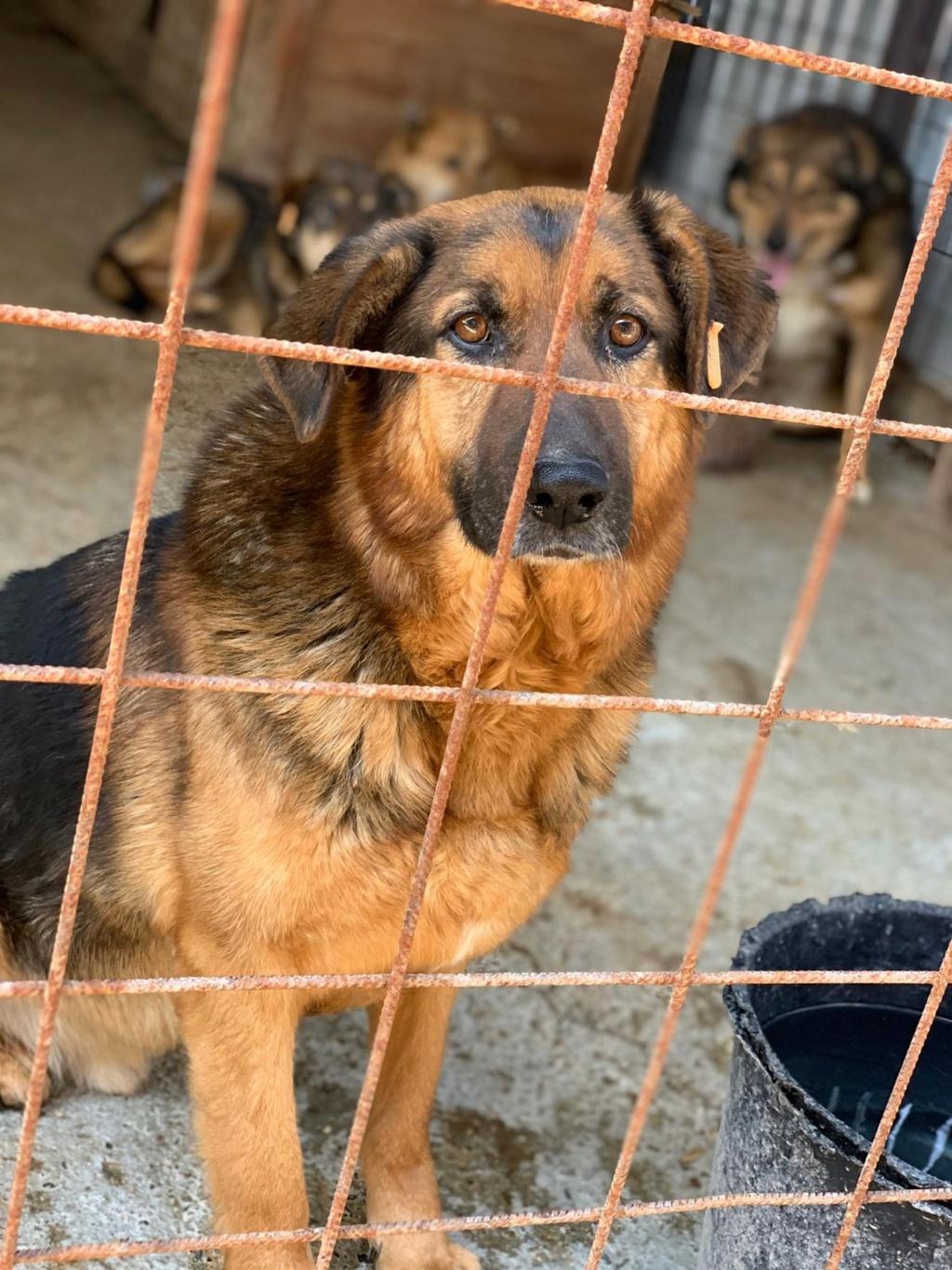 Lunky - mâle -  fourrière de Târgu Frumos - frais d'adoption réduits 58442610