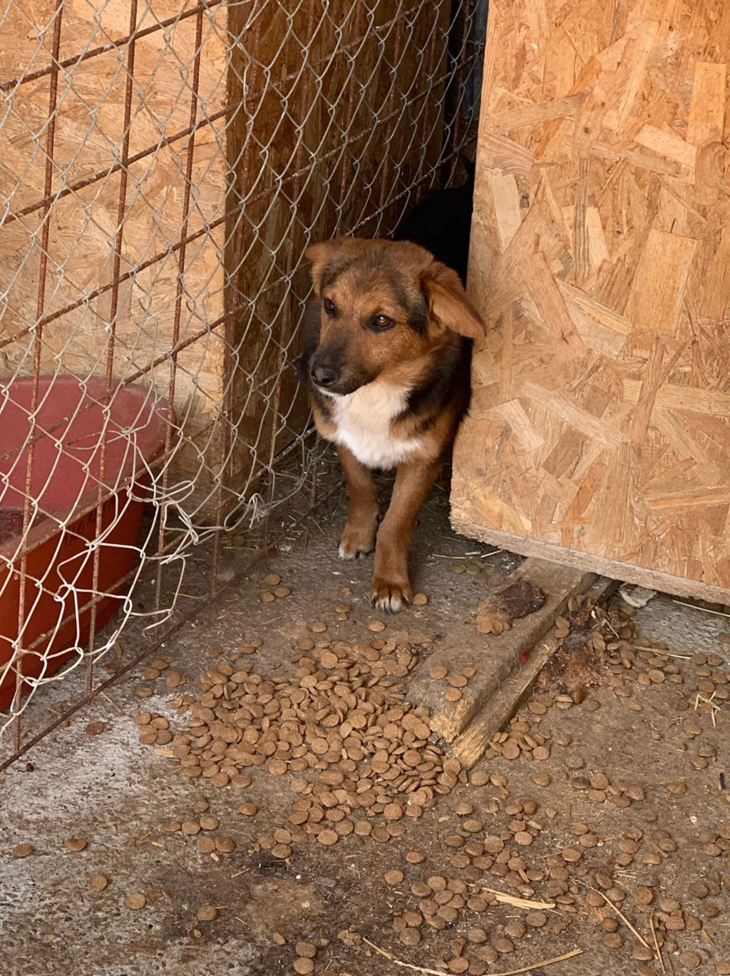 Tartine (ex-Panzani) - femelle - fourrière de Târgu Frumos - Réservée adoption (69) 58570410