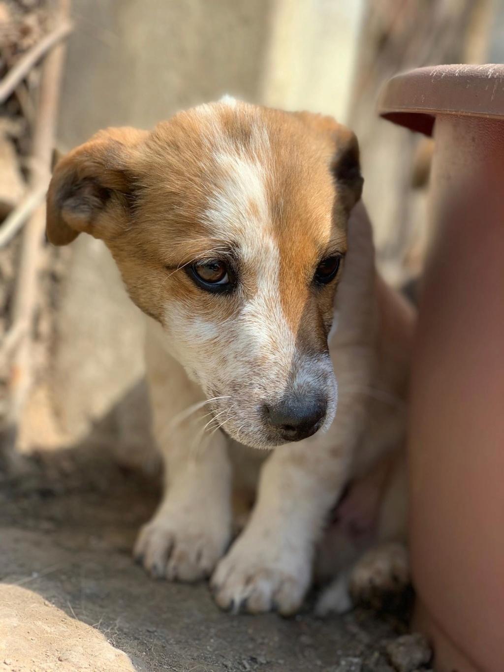 Coquin- mâle- refuge de Târgu Frumos - adopté via Andreea 58772310