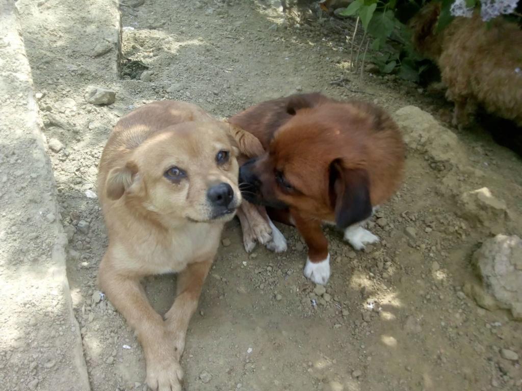 Ange- femelle- fourrière de Targû Frumos - adoptée via Andreea 59371910