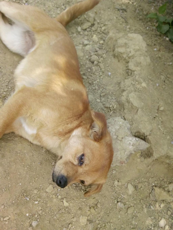 Ange- femelle- fourrière de Targû Frumos - adoptée via Andreea 59414510