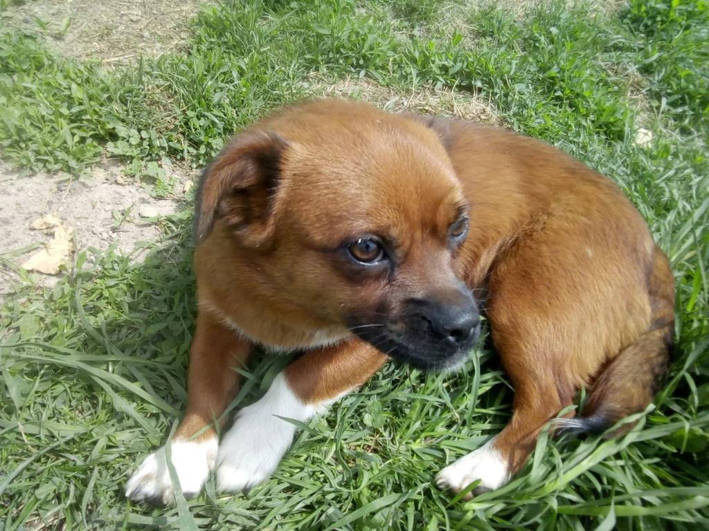 Manau-mâle- fourrière de Targû Frumos - Frais d'adoption réduits 59454710