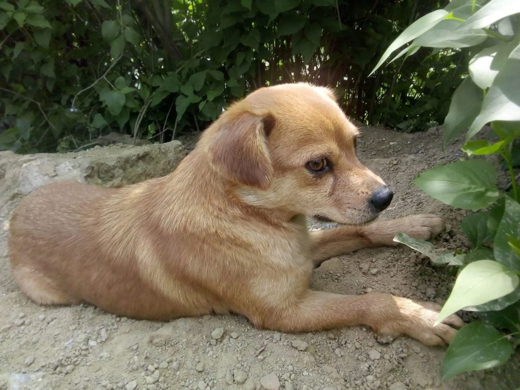 Ange- femelle- fourrière de Targû Frumos - adoptée via Andreea 59473910