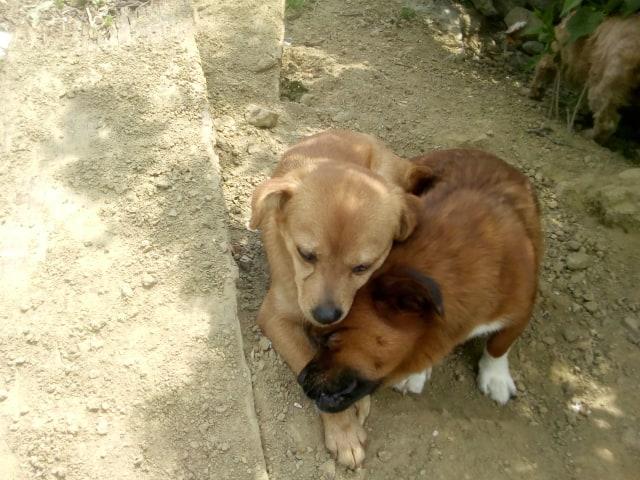 Ange- femelle- fourrière de Targû Frumos - adoptée via Andreea 59476110