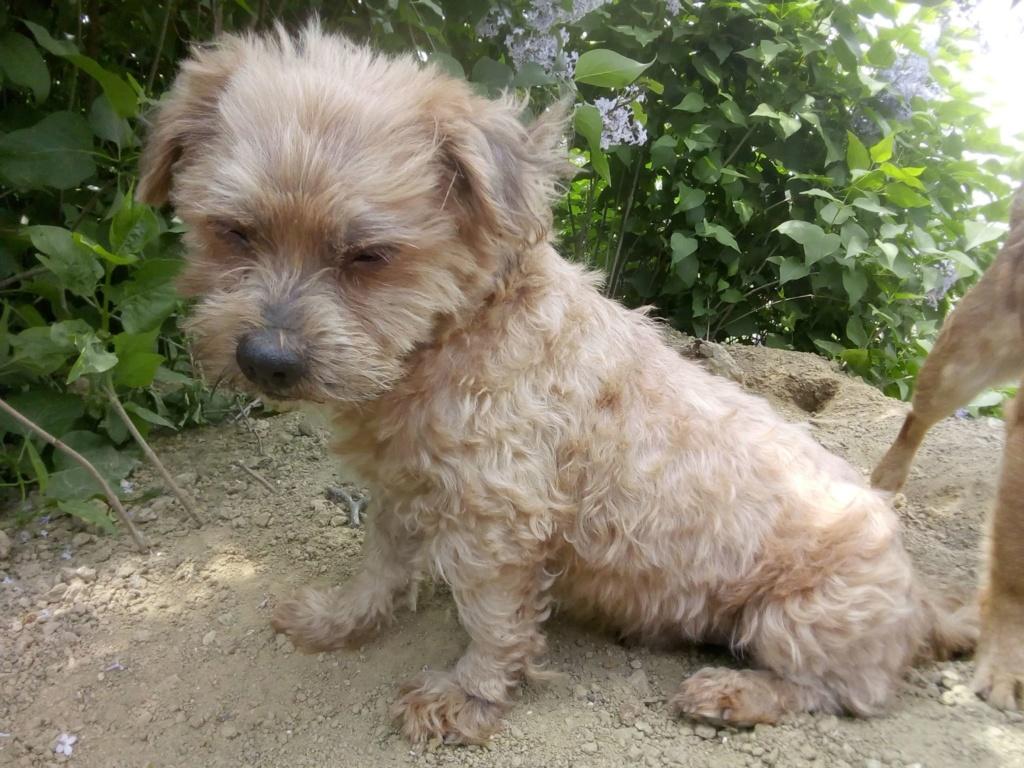 Shagman - mâle - en FA à Târgu Frumos - réservée adoption 68 59694810