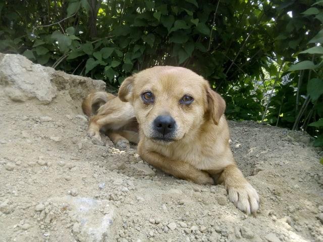 Ange- femelle- fourrière de Targû Frumos - adoptée via Andreea 59721010