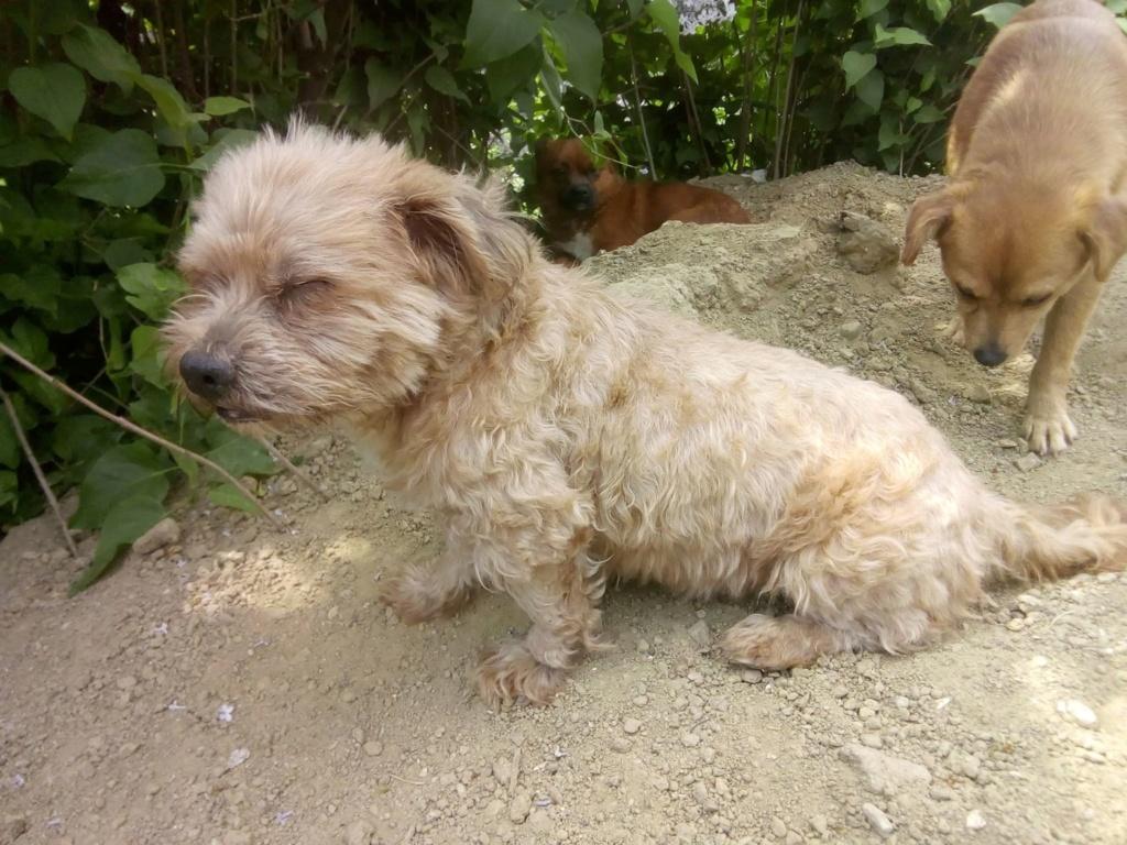 Shagman - mâle - en FA à Târgu Frumos - réservée adoption 68 59746410