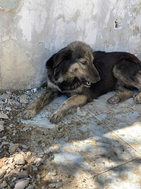 Maitika- femelle- refuge de Targu Frûmos - adoptée via Andreea 59753010