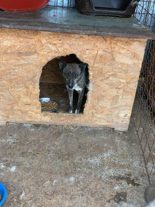 Ravioli - femelle - Fourrière de Târgu Frumos 59822510