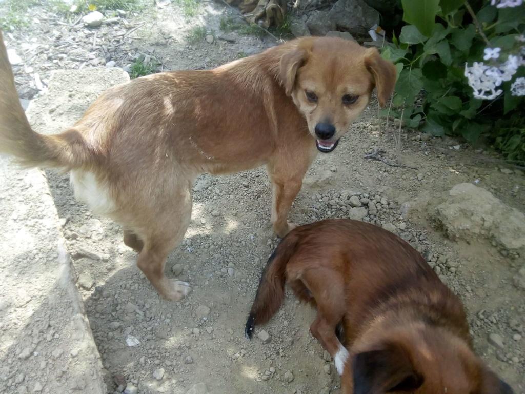 Ange- femelle- fourrière de Targû Frumos - adoptée via Andreea 59916810
