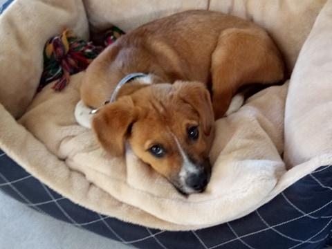 Stanley- mâle- refuge de Targu Frûmos - réservé adoption (67) 59923610
