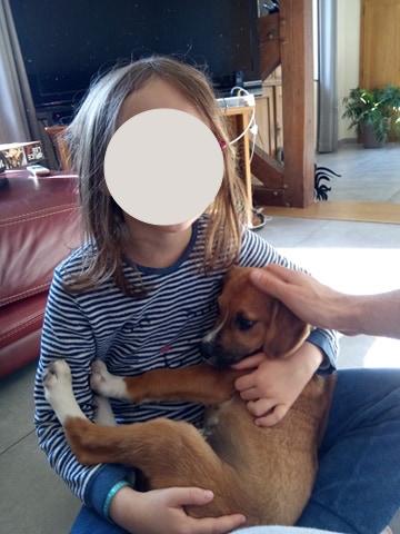 Stanley- mâle- refuge de Targu Frûmos - réservé adoption (67) 59926210