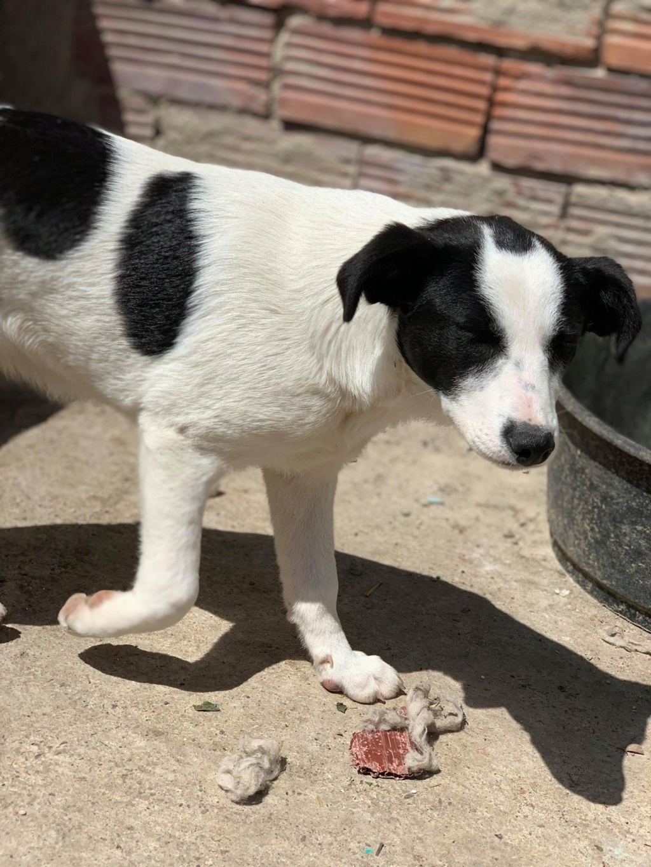 Opaline- femelle- refuge de Targu Frûmos - réservée adoption (57) 59941510