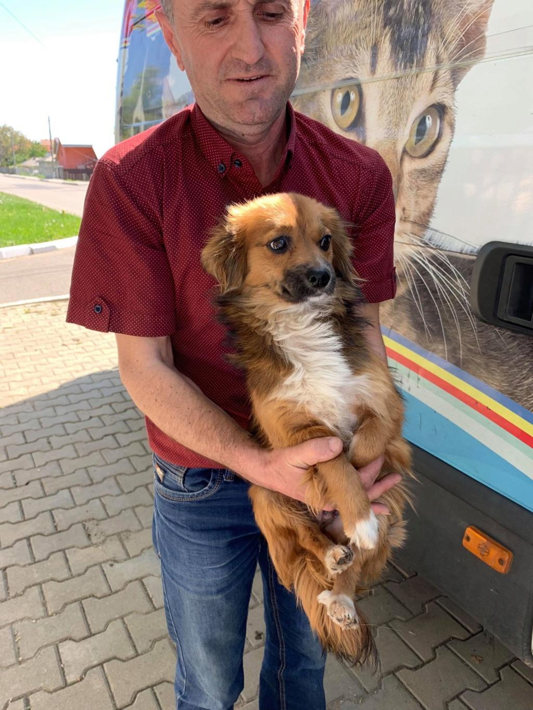 Prunelle (ex Samia) - femelle - en FA à Târgu Frumos - Réservée adoption (Suisse) 59988410