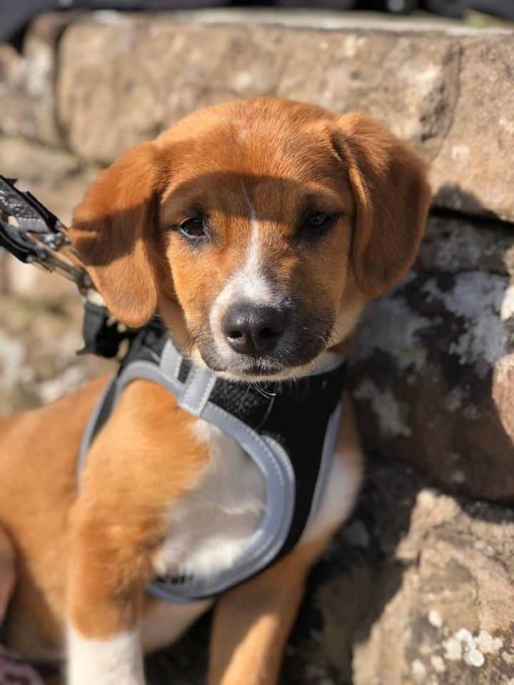 Stanley- mâle- refuge de Targu Frûmos - réservé adoption (67) 60132410
