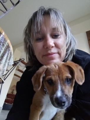 Stanley- mâle- refuge de Targu Frûmos - réservé adoption (67) 60163910