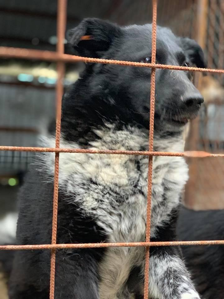 Dakota - femelle - fourrière de Târgu Frumos - Réservée adoption (88) 60173810