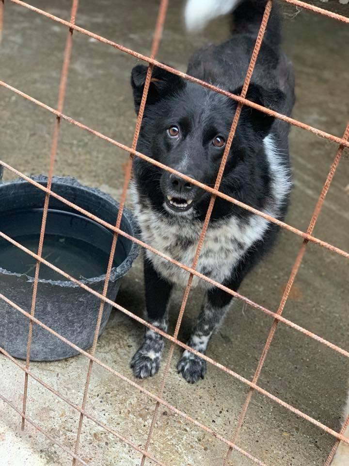 Dakota - femelle - fourrière de Târgu Frumos - Réservée adoption (88) 60224310