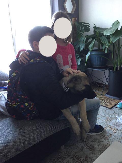 Grey-mâle- refuge d'Arad réservé adoption 67 60296710