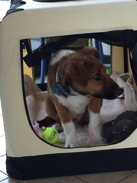 Toby- mâle-refuge de Targu Frûmos - réservé adoption 67 60313510