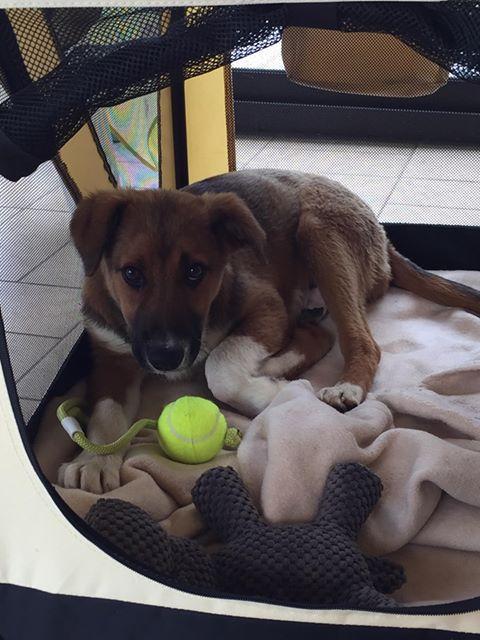 Toby- mâle-refuge de Targu Frûmos - réservé adoption 67 60383110