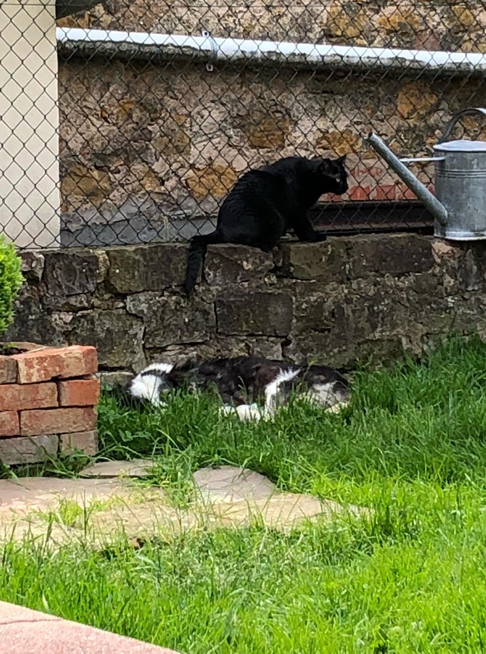 Everest - chienne femelle - fourrière de Târgu Frumos - en famille d'accueil dans le 67 60461010