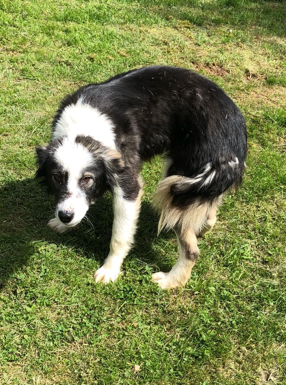 Everest - chienne femelle - fourrière de Târgu Frumos - en famille d'accueil dans le 67 60481310
